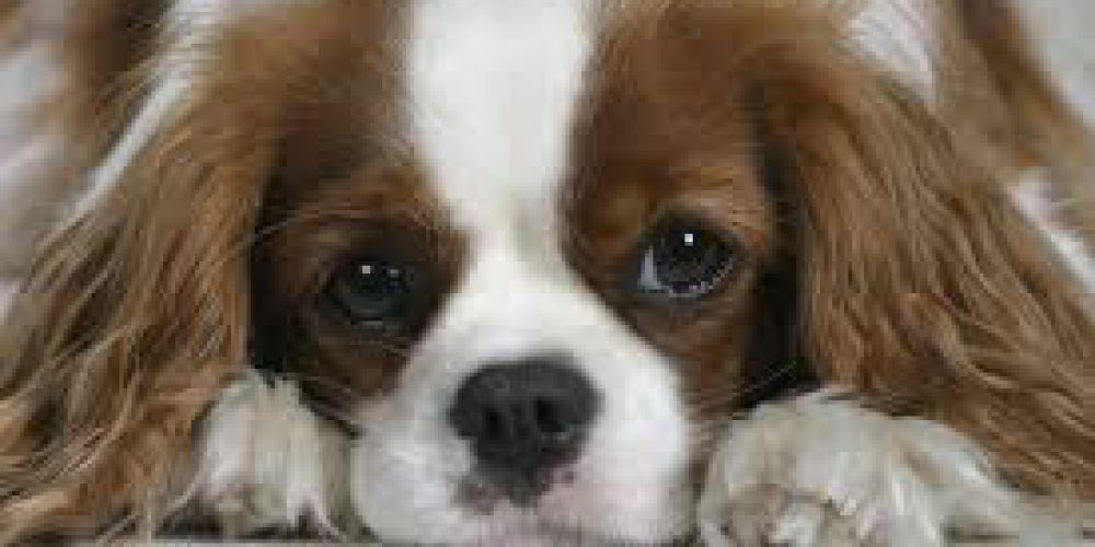 Nález dvou psů – 30.5.2017 Velká Bystřice